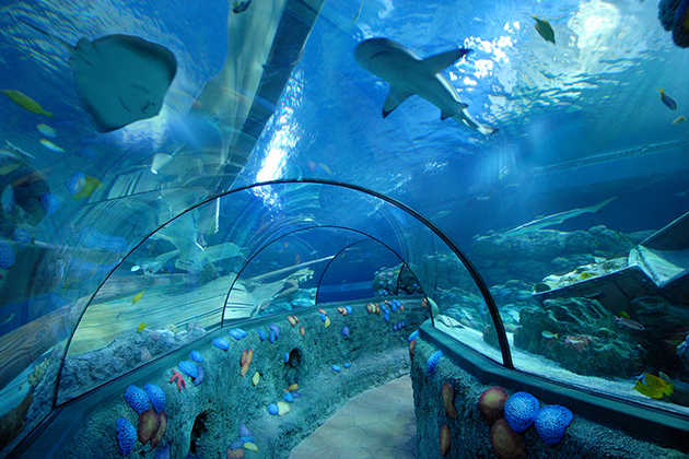 gardaland sea life aquarium lazise gardasee italien. Black Bedroom Furniture Sets. Home Design Ideas
