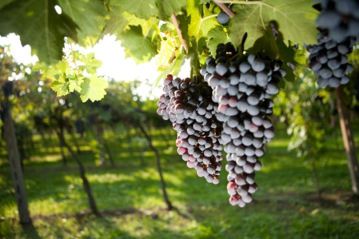 Gardaseeweine und deren Weinanbaugebiete