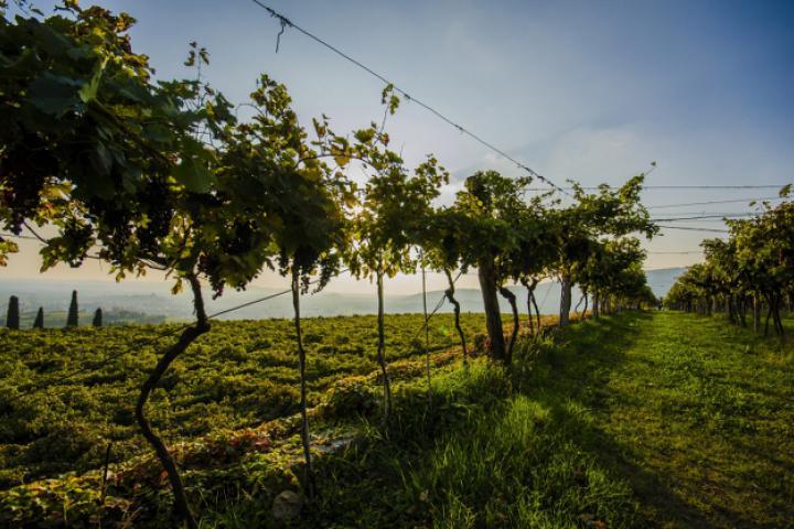 Das Valpolicella – (Wein-)Sensation zwischen Gardasee und Verona