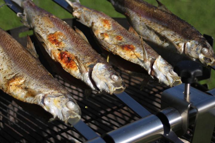 Lavarello alla Griglia oder Steckerlfisch