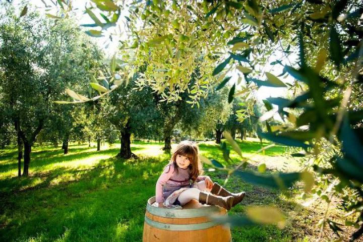 Olivenöl direkt vom Produzenten - z.B. im Frantoio Montecroce