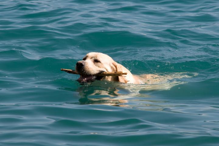Gardasee mit Haustier