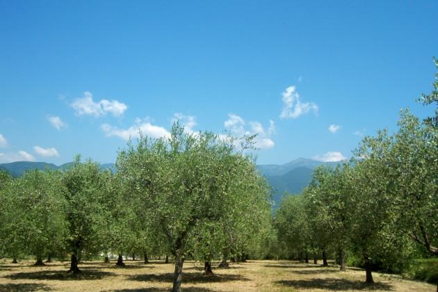 Ölmühlen der Strada dei Vini